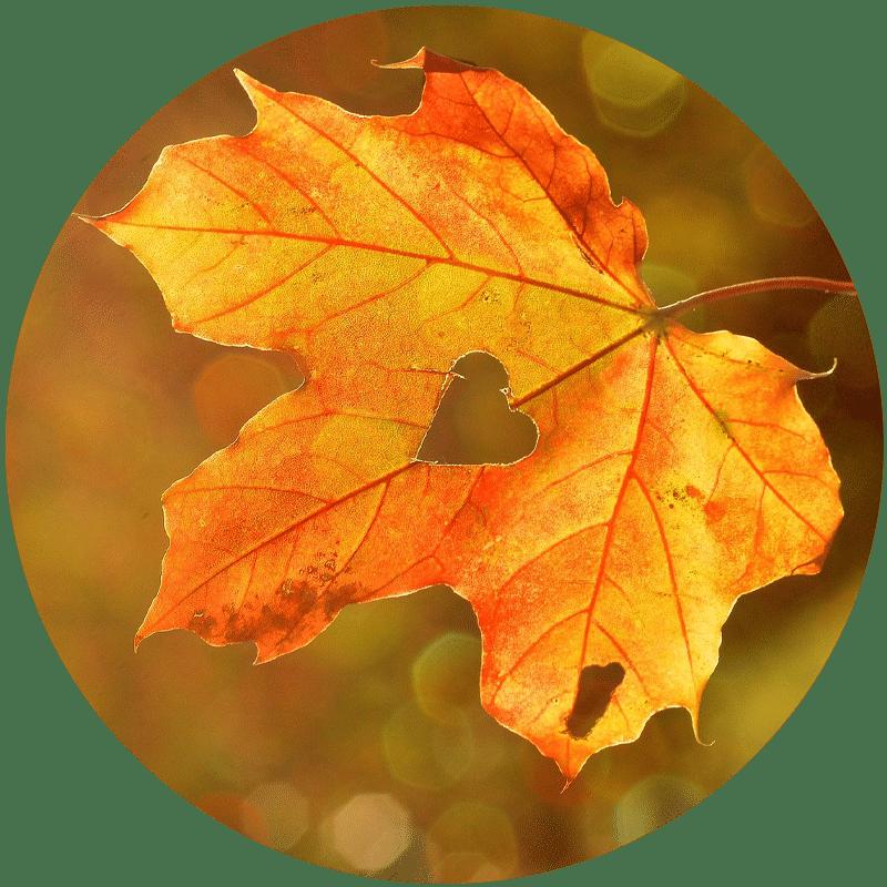 Mieux vivre l'automne avec l'ayurveda